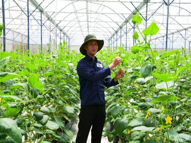 Công ty V-Organic chuyên cung cấp rau an toàn, chất lượng