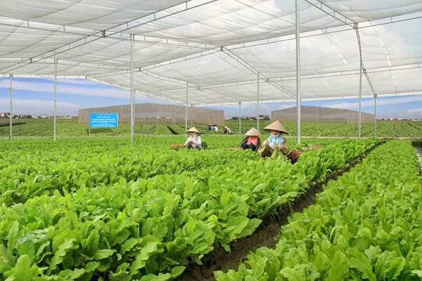 Trang trại được chứng nhận sản xuất theo hướng hữu cơ